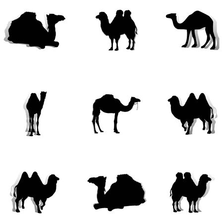Collection of black camels, silhouette on a white background, vector Ilustração