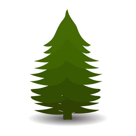 Green Christmas tree on white background, vector