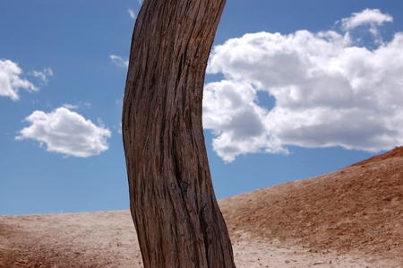 bole: A curved trunk is outstanding from surrounding in daylight