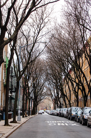 residential neighborhood: Quiet street in a residential neighborhood of Green Point in Brooklyn, New York, many cars parked near the edge of the sidewalk and the leafless trees along the road looked like a tunnel.