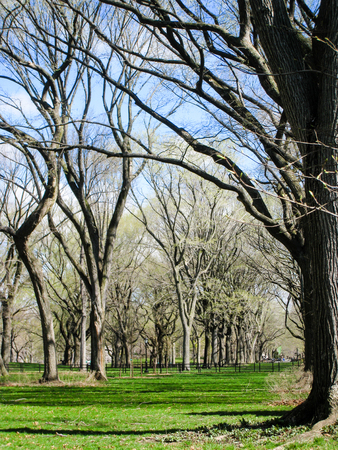 under heart: Bright green grass in blue sky on a sunny day under a lot of leafless trees in Central Park in the heart of New York City. Stock Photo