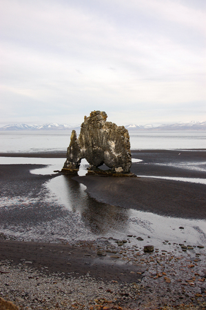 Hvitserkur, dinosaur of Iceland, the troll rock formation look like dragon drinking in northwest Iceland, the basalt sea stack off shore during low tide on black sand, mud and gravel with sea and snow mountain backdrop on bright sky.