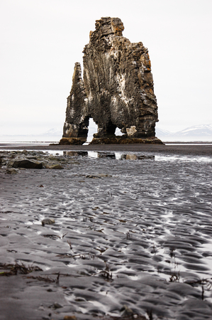 Hvitserkur, dinosaur of Iceland, the troll rock formation look like dragon drinking in northwest Iceland, the basalt sea stack off shore during low tide on black sand and mud  in foreground on bright sky.