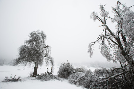 sleet: Fallen and broken trees covered with sleet and ice Stock Photo