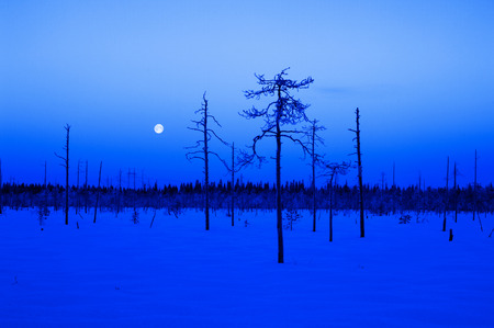 Blue winter scene with full moon and trees photo