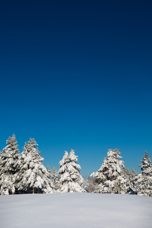 Beautiful winter scene with forest and fresh snow photo