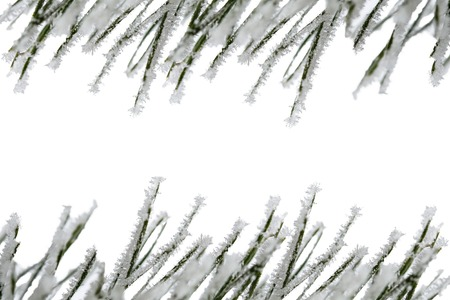 pine needles: Isolated frosty spruce and pine needles on white background