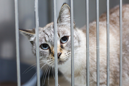 big cat: Sad cat with big eyes in a cage
