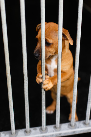 unwanted: Sad dog with in a cage behind bars Stock Photo