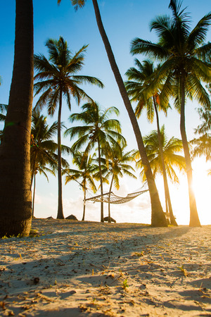 Hammock, huts and palmt rees in tropical paradise photo