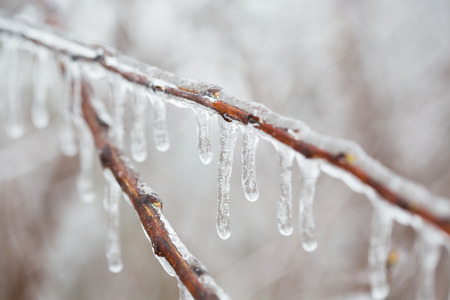 sleet: Isolated branch with melting sleet