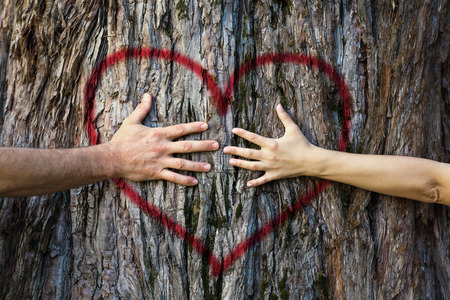 Hands of couple in love hugging a tree with painted red heart