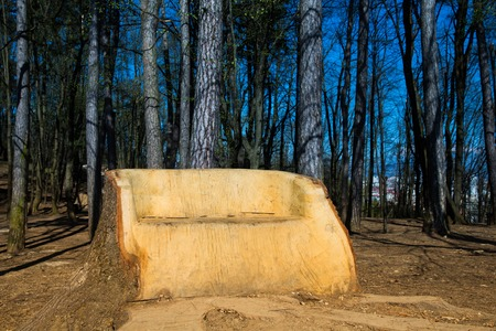 big eco friendly wooden bed in forest photo