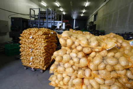 bagged: Bagged potatoes, prepared for transport and sale