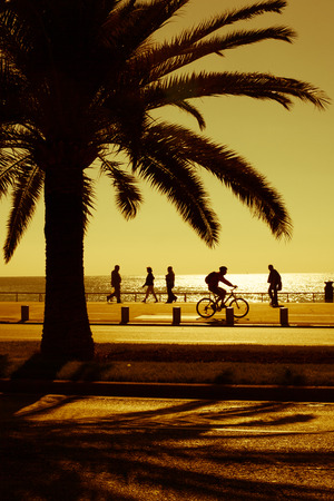 promenade: Palm tree on a seashore of the luxurious seaside resort in golden glow Stock Photo