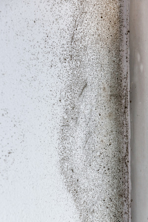 humidify: A wall with harmful, spreading black mold Stock Photo