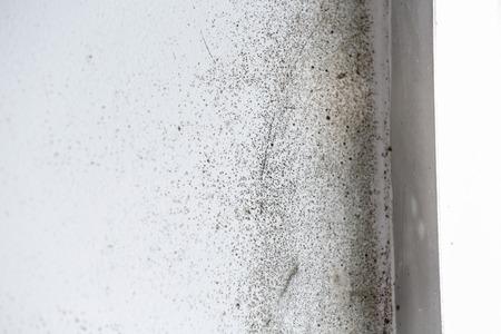 유해 확산 검은 곰팡이와 벽 스톡 콘텐츠