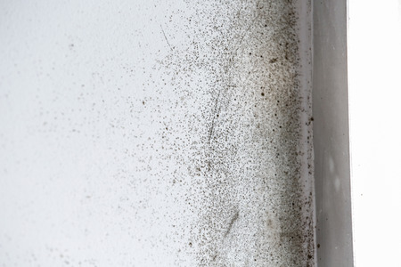 A wall with harmful, spreading black mold Stock Photo