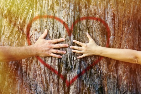 Hands of couple in love hugging a tree with painted red heart with yellow and golden sunlight
