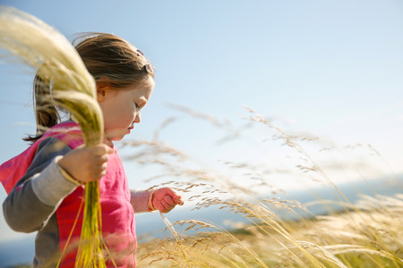 Cute little girl picking and gathering brown grasses on a meadow with the wind blowing through her long hair and sea in the background. Allergy, hay fever and hypersensitivity concept. photo