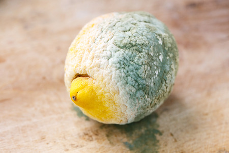 inappropriate: Close-up of putrid and moldy organic lemon, isolated on brown wooden background. Inappropriate attitude toward food, modern life and consumerism concept. Stock Photo