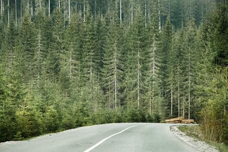 medio ambiente: Bosque de con�feras saludable con troncos de madera al lado de la carretera desolada, preparados para el transporte en un �rea silvestre del parque nacional. Industria de la madera sostenible y conceptos de medio ambiente sano. Foto de archivo