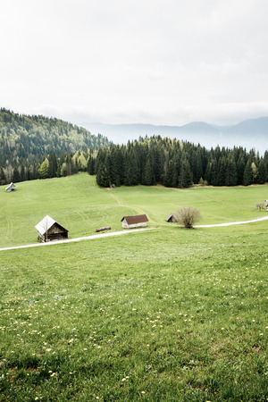 sustainable tourism: Idyllic dairy farms on alpine meadow with coniferous and deciduous forest in desolate area of national park. Sustainable industry, ecosystem and healthy, tranquil environment, eco tourism concepts.