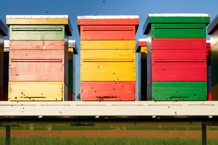 domesticated: Colorful beehives with domesticated honeybees in flight, returning to their apiary, bringing nectar for organic honey.