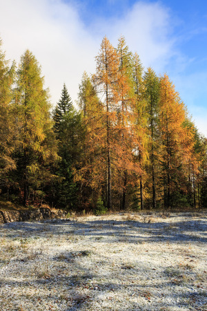 wilderness area: Mountain pasture with morning frost on grass and beautiful autumn colored trees in the mountains wilderness area, blue skies. Seasons changing, unique sunlight concept. Stock Photo