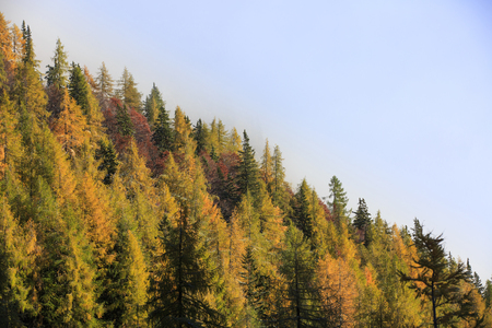 dawning: Dense coniferous autumn mountain forest in magical morning light, with dawning sun shining. Seasons changing, weather, low clouds, unique sunlight concept, textured background.