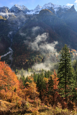 changing seasons: Coniferous and deciduous mountain forest in autumn colors, with morning foggy mist rising and snowy mountains. Seasons changing, unique sunlight concept, textured background.