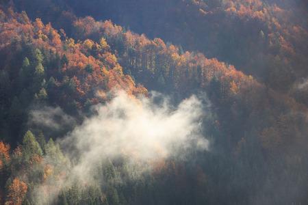 tree  pine: Con�feras y de hoja caduca del bosque de monta�a en los colores del oto�o, con niebla de la ma�ana de niebla en aumento, los rayos del sol que penetra a trav�s de �l. Cambios de estaci�n, �nico concepto luz del sol, textura de fondo. Foto de archivo