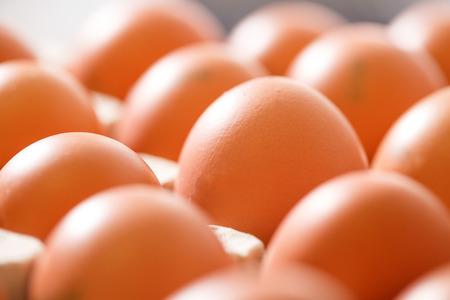 granja avicola: huevos de gallina orgánicas crudas y frescas, con la etiqueta envasados ??en sostenedores del huevo aseado, listo para ser transportados y vendidos a los consumidores. Foto de archivo