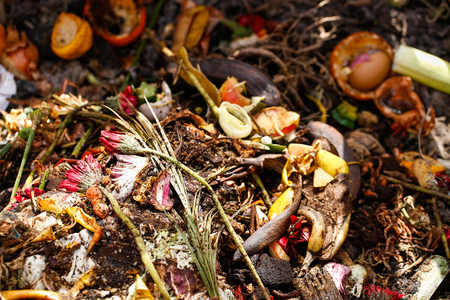 Organic biological kitchen waste, rotten food and leftovers from cooking, prepared for composting. Flowers, coffee grounds, banana, salad, onions and carrot peel. Rubbish sorting and organic waste. Archivio Fotografico