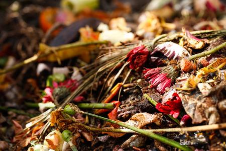 desechos organicos: Org�nica de residuos biol�gicos de la cocina, los alimentos y las sobras de la cocina podrida, preparado para el compostaje. Flores, granos de caf�, pl�tano, ensalada, cebolla y zanahoria c�scara. recogida selectiva de basuras y residuos org�nicos.