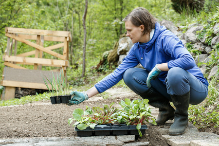 Gardener kneeling and preparing seedlings for planting in freshly ploughed garden beds. Organic gardening, healthy food, nutrition and diet, self-supply and housework concept.