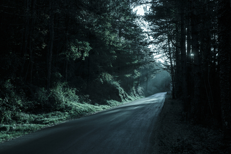 Spooky dark forest with empty road in receding light. Emotional, gothic background, eerie natural scene concept.