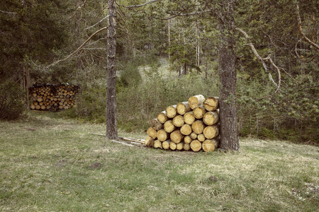 forest conservation: Woodpiles of big pieces of cut timber, wooden trunks in a forest setting. Forestry industry, natural conservation, sustainable energy resources concept