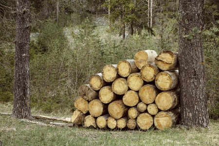 forestry: Woodpile of big pieces of cut timber, wooden trunks in a forest setting. Forestry industry, natural conservation, sustainable energy resources concept