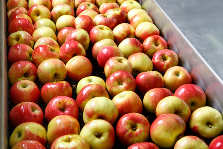 production facility: Ripe apples being processed and transported for size and color sorting and for packing in an industrial production facility. Healthy fruits, diet and food industry concept and textured background.