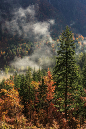 penetrating: Coniferous and deciduous mountain forest in autumn colors, with morning foggy mist rising, sun rays penetrating through it. Seasons changing, unique sunlight concept, textured background.
