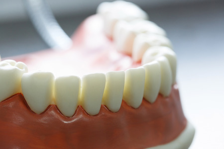 Lower jaw dental model. Dental hygiene education concept, background with copy space.  Stock Photo