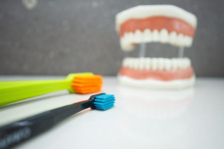 Toothbrushes with upper and lower jaw dental model in the background. Proper cleaning, dental hygiene education and prevention concept and background.