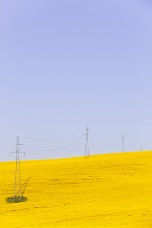 electricidad industrial: Electricity powerlines over vibrantly colorful rapeseed fields. Power supply, agriculture mass production, modern industrial landscape concept and background with copy space.