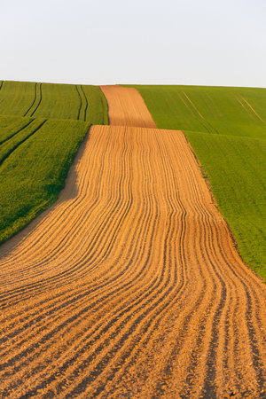 Agricultural land with fresh crops. Large-scale production, agribusiness, food production concept and textured background with copy space.   Stock Photo
