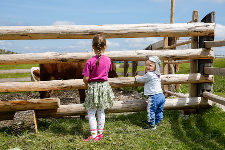 Boy and a girl enjoying outdoors, observing cows on a farm. Active childhood and lifestyle, family time, life learning concept.