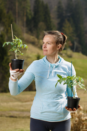Woman gardener watching her tomato seedlings prepared to be planted on her garden. Organic gardening, healthy food, self-supply and housework concept.