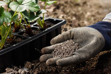 Gardener blending organic fertiliser humic granules with soil, enriching soil for plants to grow optimally. Organic gardening, healthy food, nutrients, self-supply, housework concept. Banco de Imagens