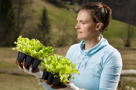 Woman gardener watching her lettuce seedlings prepared to be planted on her garden. Organic gardening, healthy food, self-supply and housework concept.