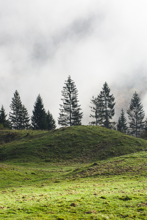 Mountain pasture with spruce trees in the distance. Sustainable industry, eco-friendly forestry, natural environment concept and background. Banco de Imagens